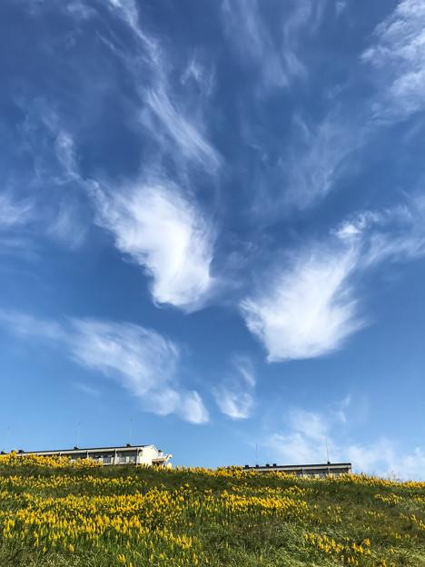 踊り舞う雲