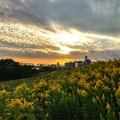 Photos: 淀川の夕景