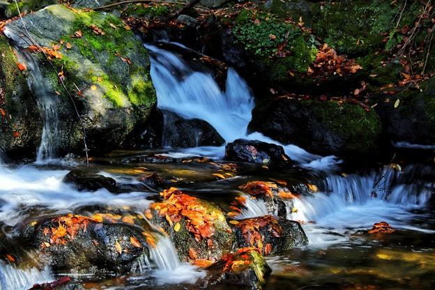 渓流の落ち葉