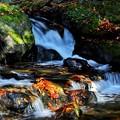 Photos: 渓流の落ち葉