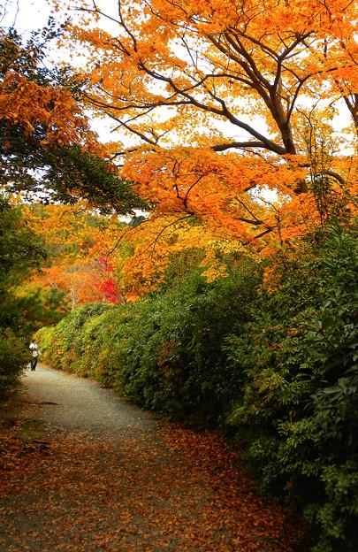 紅葉の散策路