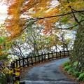 Photos: 嵐山散策路