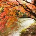 もみじ(嵐山)