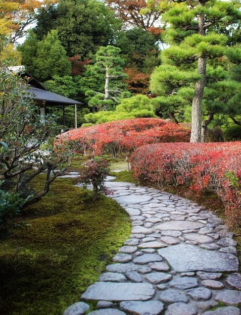 京都 二条城庭園
