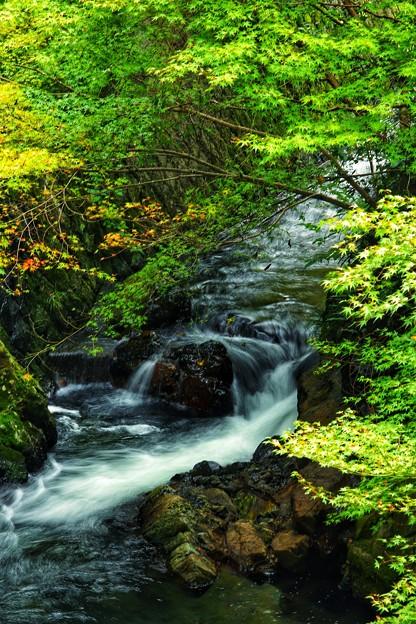 初秋の渓流