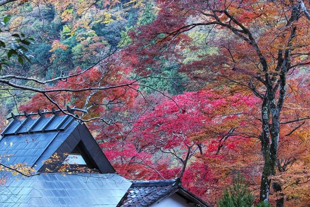溢れる秋色