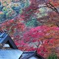 Photos: 溢れる秋色