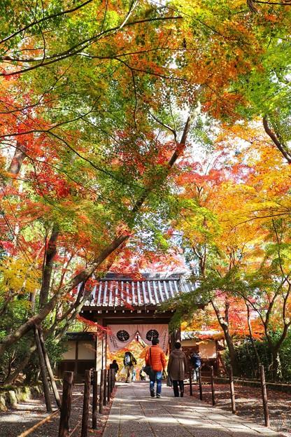 モミジのトンネル(光明寺)