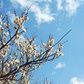 P1050298 梅の花...2