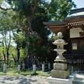 写真: DSC_8673 -1 本殿と御神木...。