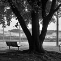 写真: DSC_8630 木陰、ベンチと...。
