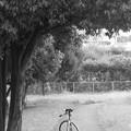 写真: DSC_8635 木陰にて...。