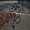 写真: DSC_9358 16-9 -2 落ち葉と...。