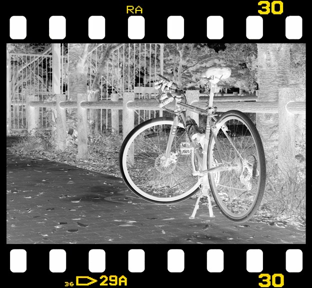 DSC_8923 MonoChrome Film  ネガ...1
