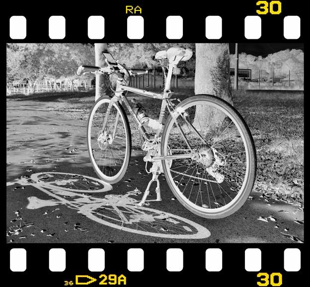 DSC_8998 16-9 MonoChrome Film ネガ...3