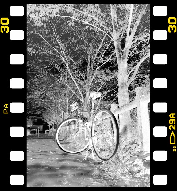 Photos: DSC_8940 MonoChromejpg Film  ネガ...4