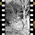 Photos: DSC_8940 MonoChromejpg Film  ネガ...4
