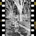 Photos: DSC_8945 MonoChrome Film ネガ...5