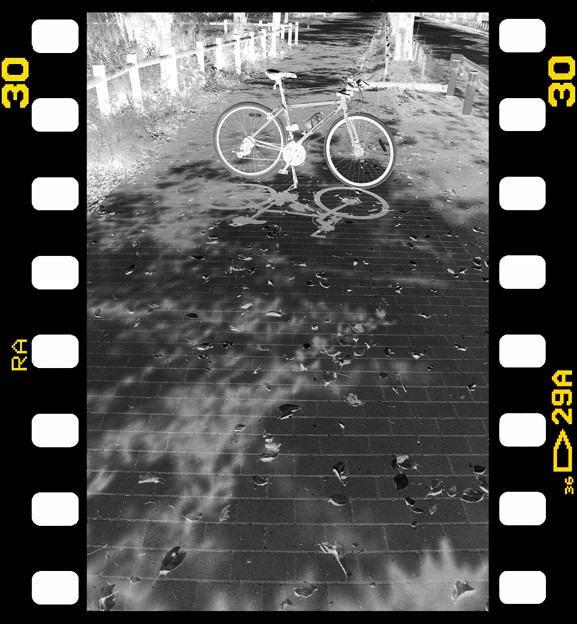 DSC_8958 MonoChrome Film ネガ...6
