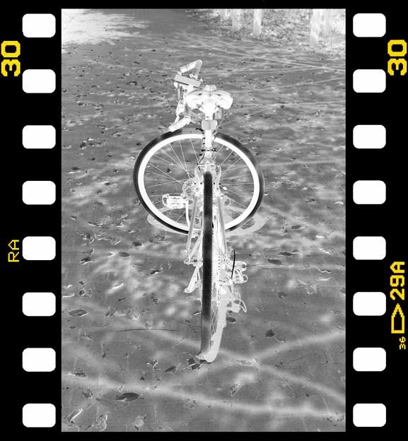 Photos: DSC_8963 MonoChrome Film ネガ...7