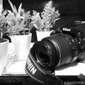 Photos: CIMG0537 CASIO EX-2300 テストショット