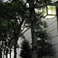 Photos: DSC00433 (1) 16-9 街路灯...A