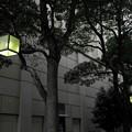 Photos: DSC00436 (1) 16-9 街路灯...B