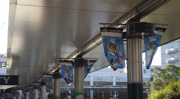 川崎フロンターレ 旗