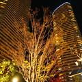 Photos: DSC09077 武蔵小杉周辺を夜景と散歩...2