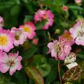 Photos: なんの花だろ...1