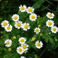 Photos: なんの花だろ...7
