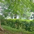 DSC03297 良く行く公園にて...。