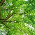 木の葉の緑...。
