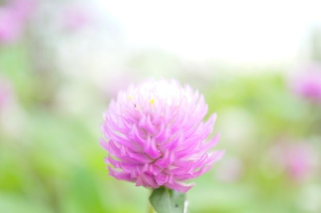 Photos: 喫茶店に咲く花…1