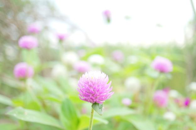 Photos: 喫茶店に咲く花…2