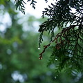 Photos: 雨滴