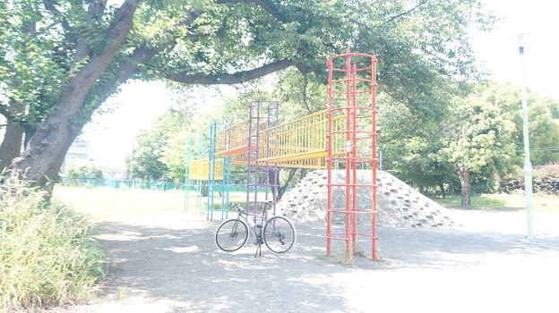 DSC03455 公園巡り