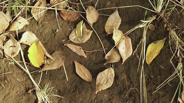 色づいた落ち葉と…。