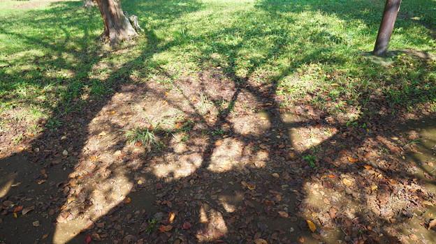 大きな木と影と、落ち葉と…。