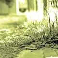 Photos: DSC_1591 16-9 High-Key Green