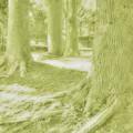 Photos: DSC_1575 16-9 MonoChrome Green