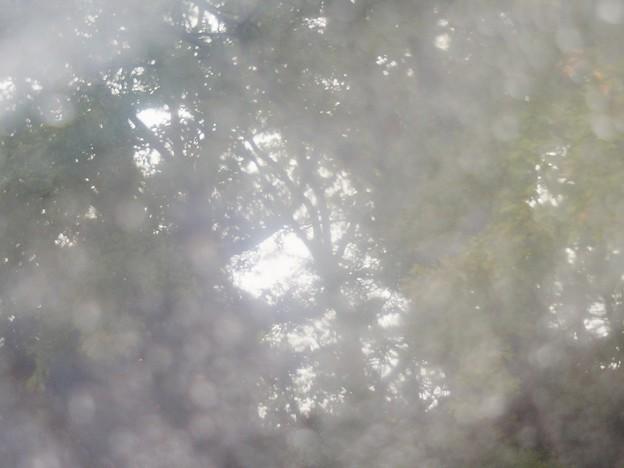Photos: 雨傘…1