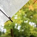 Photos: 雨傘…3