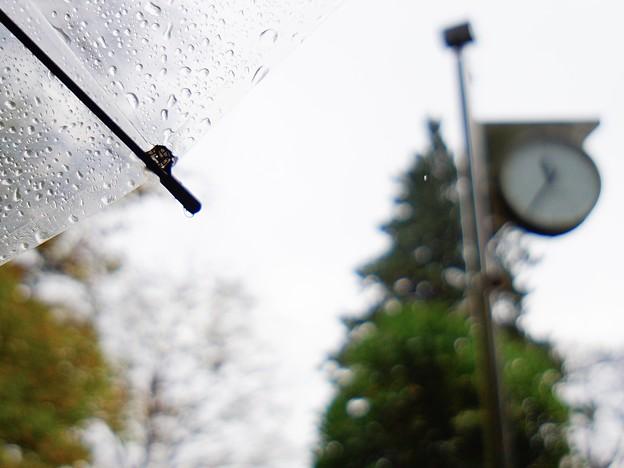 Photos: 雨傘…4