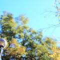 Photos: DSC05173_ToneMapping 風の中で、...、ToneMappingにて...。
