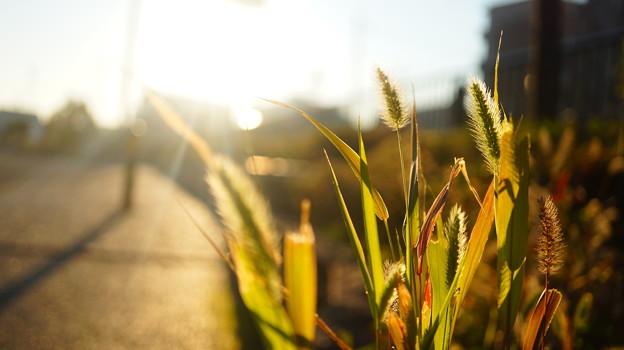 Photos: 季節はまだまだ、秋…?