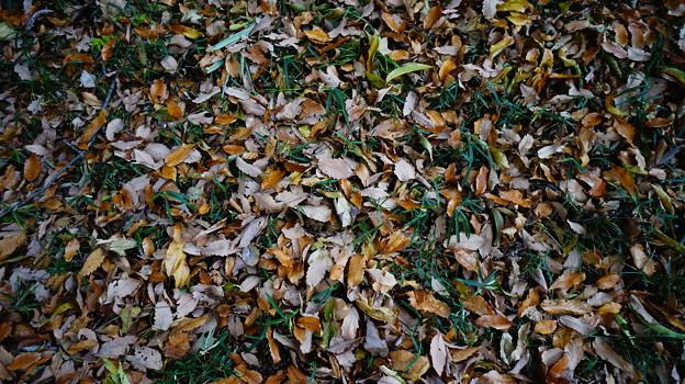 Photos: カラフルな落ち葉