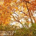 Photos: 新年 IMG_4473