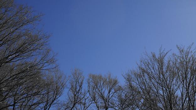 木々と空と…。