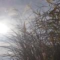 太陽と日差しのなかで...。